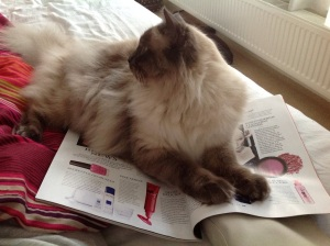 This cat has more use for reading material than I do.