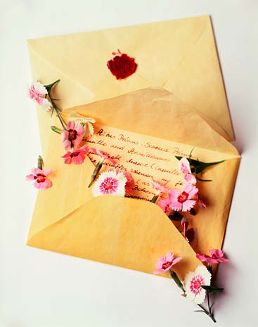 Dianthus and Letter